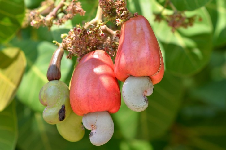 Are Cashews AIP?